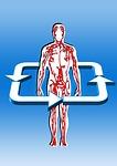 Koerper mit Blutkreislauf